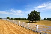 stock photo of split rail fence  - Tree in the middle of yard and also seen white fence - JPG