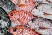 stock photo of red snapper  - Red snapper and tilapia on display on ice fill the frame - JPG