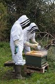 stock photo of bee keeping  - Beekeepers dressed in protective suits to carrying out maintenance checks on their bee hive using a smoker to calm the bees - JPG