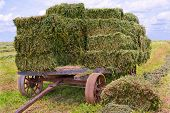 stock photo of hay bale  - An old wooden cart with heavy iron wheels gathers bales of fresh green hay on a farm in southern Pennsylvania - JPG