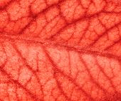 Blood Vessels Of The Brain