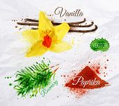 picture of vanilla  - Spices herbs set drawn watercolor blots and stains with a spray vanilla - JPG