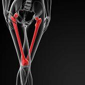 stock photo of sternum  - 3d rendered illustration of the female femur bone  - JPG