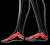 Постер, плакат: Foot Bone