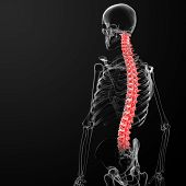pic of coccyx pain  - 3d render human spine  - JPG