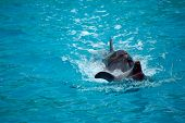 image of bottlenose dolphin  - Two dolphins close up - JPG
