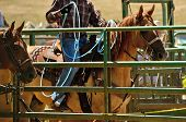 picture of wrangler  - A cowboy works his rope during the team steer roping competition at a small summer rodeo in Oregon - JPG