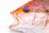 image of red snapper  - Fresh Red Snapper Fish On White Background  - JPG