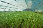 pic of greenhouse  - Organic greenhouse - JPG