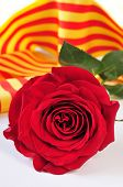 Постер, плакат: a red rose and the catalan flag on a book for Sant Jordi the Saint Georges Day when it is traditio