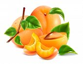 stock photo of apricot  - Apricots with green leaves - JPG