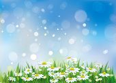 picture of chamomile  - Spring landscape - JPG