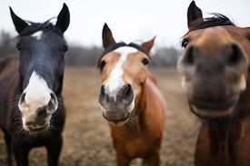 pic of cute animal face  - Wild horses on the meadow at spring time  - JPG