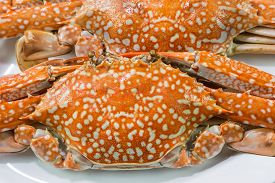 stock photo of cooked blue crab  - Close up of streamed blue crabs  - JPG