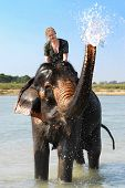 blonde european girl getting a wet t-shirt on an elephant in asia