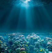 Sea or ocean seabed with coral reef. Underwater view. poster