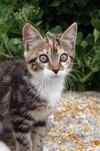 Young cute kind domestic cat portrait poster