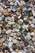 Pebbles And Water