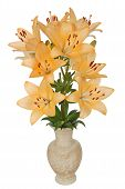 picture of asiatic lily  - Asian lily flowers lat. Asiatic Hybrids in a ceramic vase isolated on white background