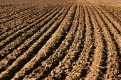stock photo of plowed field  - the image shows the furrows in a field after plowing it - JPG