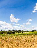 pic of youg  - Italy Tuscany region Orcia Valley - JPG