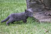 stock photo of arctic fox  - Arctic fox kit profiled near opening of hollowed log - JPG