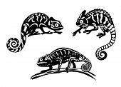 pic of chameleon  - Chameleon species in black and white cartoon style - JPG