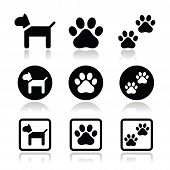 picture of dog footprint  - Vector icons set of dog and paws isolated on white - JPG