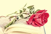 stock photo of poetry  - Open book and red rose with glasses on pages of book romantic vintage old look poetry concept - JPG