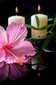 picture of tendril  - Beautiful spa setting of delicate pink hibiscus green tendril passionflower candles and zen stones with drops on water - JPG