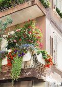 stock photo of lobelia  - Flowers on forged balcony in Rimini - JPG