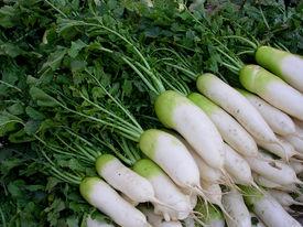 foto of turnip greens  - Fresh turnips with leaves on the market - JPG