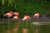 picture of long-legged-birds  - Perfect birds in water outdoors in nature - JPG