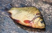 picture of freshwater fish  - Raw freshwater fish carp on a wooden board - JPG