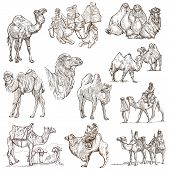 pic of freehand drawing  - CAMELS  - JPG