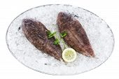 foto of soles  - Dover Sole on ice isolated on a white background - JPG