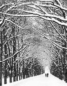 stock photo of tree lined street  - Two people are on the long avenue of trees along - JPG