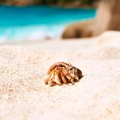 stock photo of hermit crab  - Hermit crab on beach at Seychelles - JPG