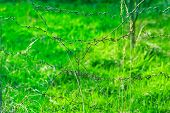 picture of barbed wire fence  - Barbed wire fence on background of summer green grass  - JPG
