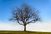 picture of lonely  - Lonely dead tree with the blue sky - JPG