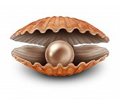 picture of oyster shell  - Pearl in an open sea shell as a metaphor for a rare treasure discovery and fortune as a seashell with a valuable natural precious sphere inside on a white background - JPG