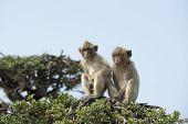 pic of monkeys  - Monkey on a tree - JPG