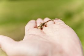foto of lizards  - Young lizard  - JPG