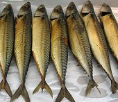 stock photo of catching fish  - mackerel waiting on the market - JPG