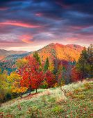 Colorful Autumn Scene On The Svydovets Mountain Range In Carpathian Mountains poster