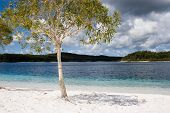 image of mckenzie  - Lake McKenzie is an amazing clear lake on fraser island with super white sand - JPG