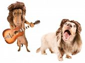 pic of mullet  - two rock star dogs with mullets - JPG