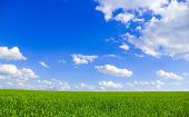 stock photo of blue sky  - field on a background of the blue sky - JPG