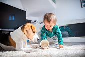 Dog With A Cute Caucasian Baby Girl On Carpet In Living Room. Dog Observe Baby Playing With A Cup. poster