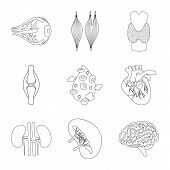 Vector Design Of Anatomy And Organ Icon. Collection Of Anatomy And Medical Stock Vector Illustration poster